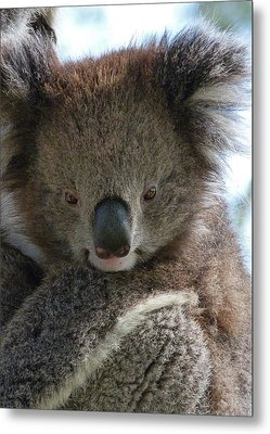Victorian Koala Metal Print by Margaret Saheed