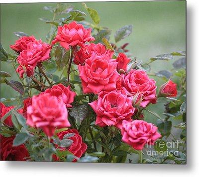 Victorian Rose Garden Metal Print by Carol Groenen