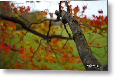 View From A Tree Metal Print by Alex King
