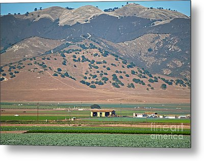 View From The Crops Metal Print