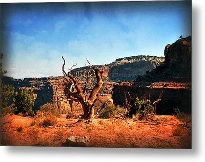 View Of The Canyon Metal Print by Marty Koch