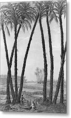 View Of The Ruins Of Memphis Seen From The South East Metal Print by Jean Louis Delignon