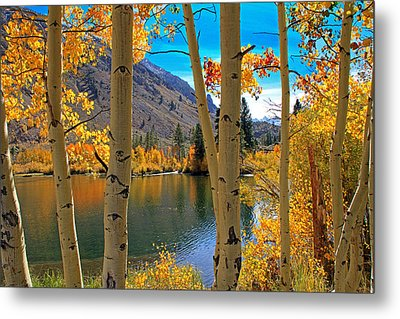View Through The Aspens Metal Print by Donna Kennedy