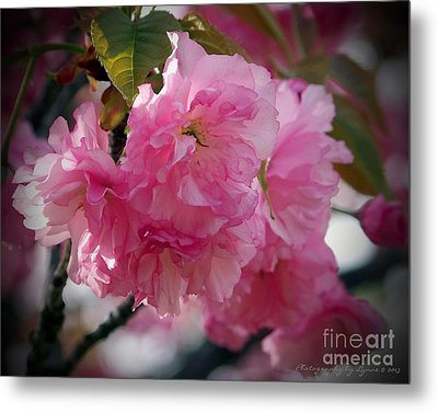 Metal Print featuring the photograph Vignette Cherry Blossom by Gena Weiser