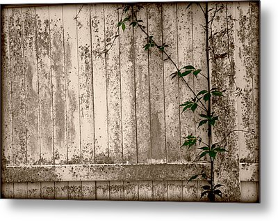 Metal Print featuring the photograph Vine And Fence by Amanda Vouglas