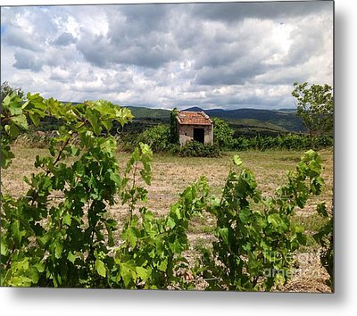 Vine And Fig Tree Metal Print