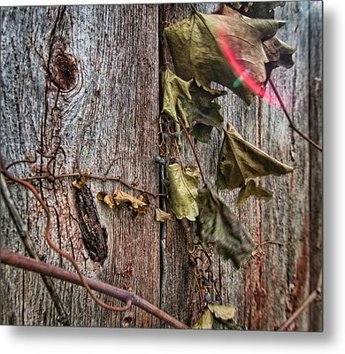 Metal Print featuring the photograph Vines And Barns by Daniel Sheldon