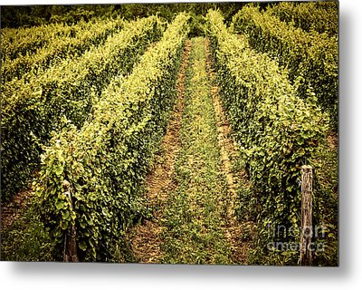 Vines Growing In Vineyard Metal Print by Elena Elisseeva