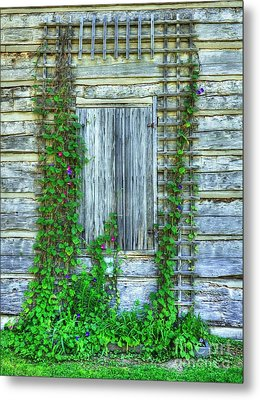 Vines Of Metamora Metal Print by Mel Steinhauer