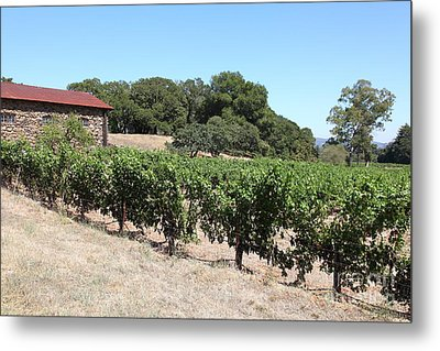 Vineyard And Stallion Barn At Historic Jack London Ranch In Glen Ellen Sonoma California 5d24579 Metal Print by Wingsdomain Art and Photography