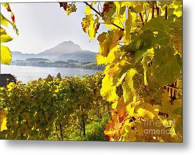 Vineyard At Lake Lucerne Metal Print by George Oze