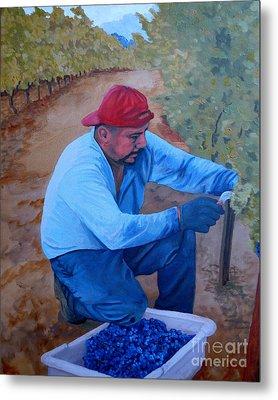 Vineyard Harvest Iv Metal Print by Donna Schaffer