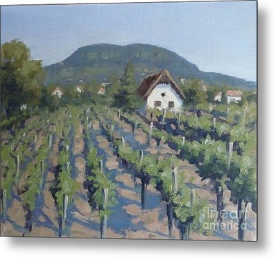 Vineyard Of Badacsony Metal Print