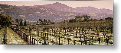 Vineyard On A Landscape, Asti Metal Print