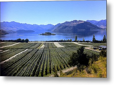 Vineyard View Of Ruby Island Metal Print by Venetia Featherstone-Witty