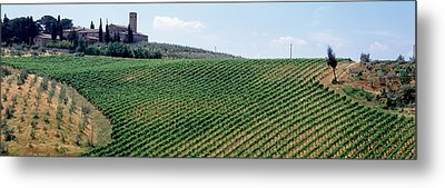 Vineyards And Olive Grove Outside San Metal Print by Panoramic Images