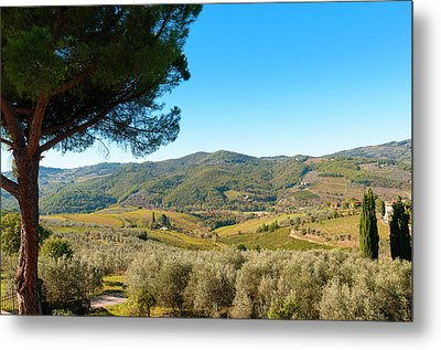 Vineyards And Olive Groves, Greve Metal Print by Nico Tondini