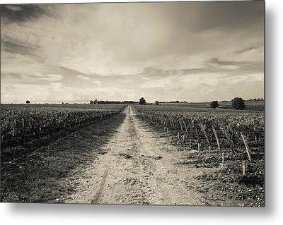Vineyards In Autumn, Pauillac, Haut Metal Print