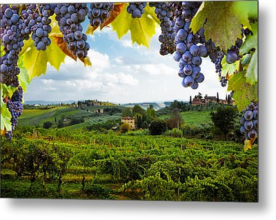 Vineyards In San Gimignano Italy Metal Print by Susan Schmitz
