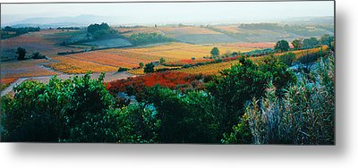 Vineyards In The Late Afternoon Autumn Metal Print