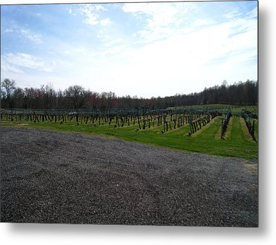 Vineyards In Va - 121267 Metal Print