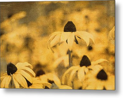 Metal Print featuring the photograph Vintage Black-eyed Susans by Peggy Collins