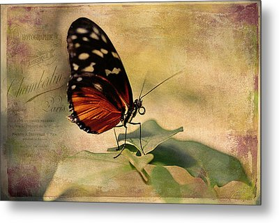 Vintage Butterfly Card Metal Print by Maria Angelica Maira