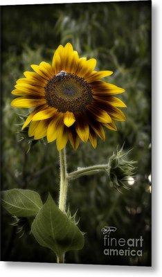 Vintage Rustic Sunflower Metal Print by Cris Hayes