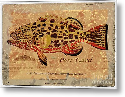 Vintage Yellowfin Grouper Postcard Metal Print by Audreen Gieger-Hawkins