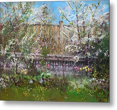 Viola's Apple And Cherry Trees Metal Print