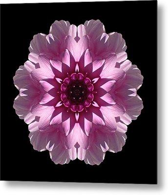 Violet And White Dahlia I Flower Mandala Metal Print