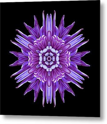 Violet Chrysanthemum Iv Flower Mandala Metal Print by David J Bookbinder