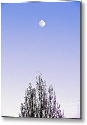 Metal Print featuring the photograph Violet Moon And Treetop by Chris Anderson