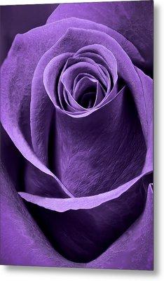 Violet Rose Metal Print by Adam Romanowicz