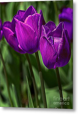 Violet Tulips 2 Metal Print