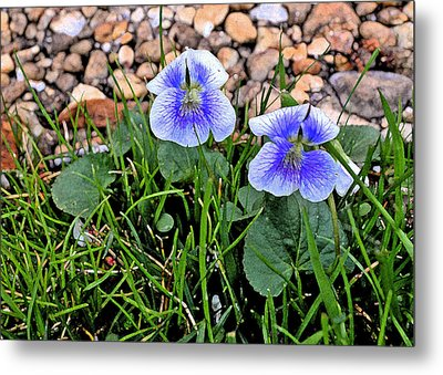 Violet Two Metal Print by Larry Bishop