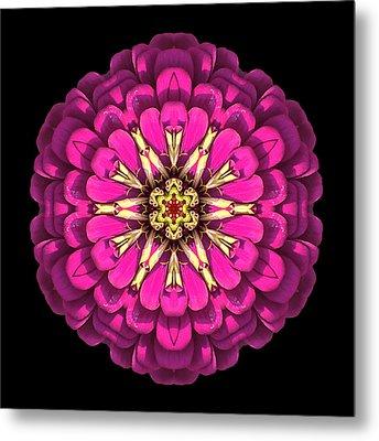 Violet Zinnia Elegans Flower Mandala Metal Print by David J Bookbinder