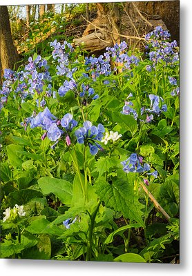 Virginia Bluebells Metal Print