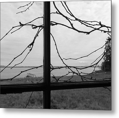 Metal Print featuring the photograph Virginia Creeper  by Cheryl Hoyle