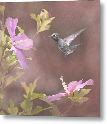 Visitor In The Rose Of Sharon Metal Print