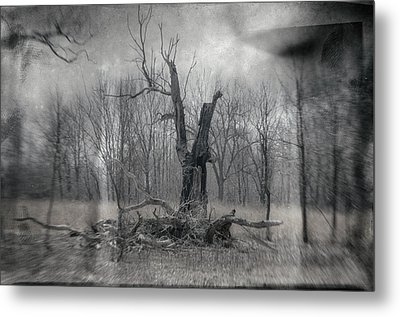 Visitor In The Woods Metal Print by Jim Shackett