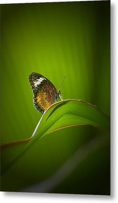 Metal Print featuring the photograph Visitor by Randy Pollard