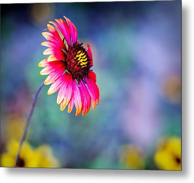 Vivid Colors Metal Print by Tammy Smith