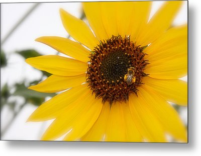 Metal Print featuring the photograph Vivid Sunflower With Bee Fine Art Nature Photography  by Jerry Cowart