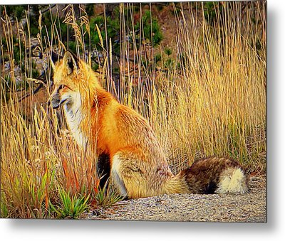 Vixen Metal Print by Karen Shackles
