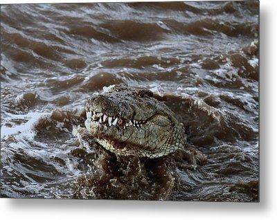 Voracious Crocodile In Water Metal Print