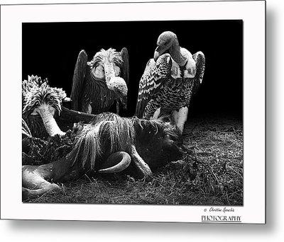 Vulture Metal Print by Christine Sponchia