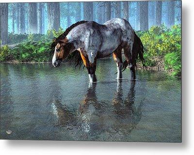 Wading Horse Metal Print by Daniel Eskridge
