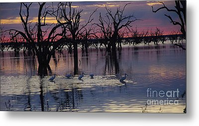 Wading The Shallows Metal Print