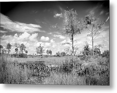 Wagon Wheel Road Bw Metal Print by Rudy Umans